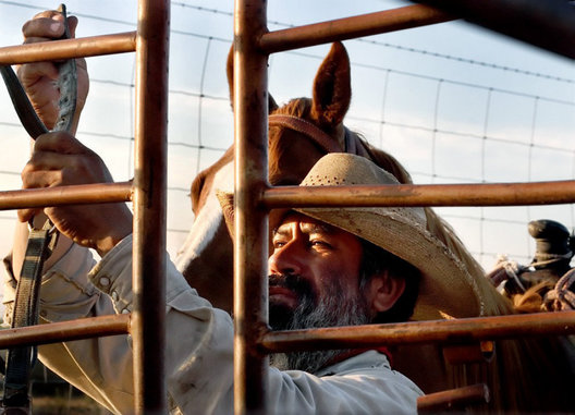 Sunrise Cowboy, rancher prepares for a cattle ride in the morning sun, Laredo, Texas