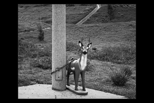 chained ornamental deer, Anaheim Hills