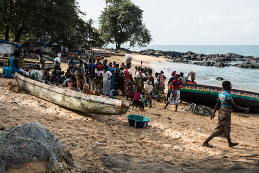 The village of John Obey comes together every morning to collect the fish.