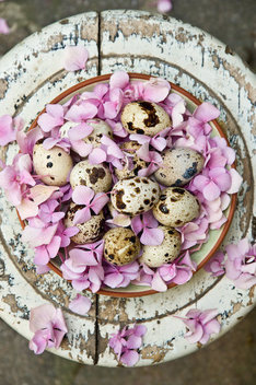 Quail eggs in a nest of pink flowers