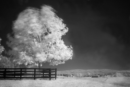"Infrared photograph of a tree blowing in the wind at Historic Long Branch in Millwood, Virginia.  This image is part of my ""Alternative Reality"" series.  All cameras have an internal filter that blocks most, if not all, infrared light from passing through it.  Because the infrared blocking filter in my camera still allows a very small amount of infrared light to trickle through, I am able to do infrared photography by placing a filter on my camera lens that blocks all visible light.  Thus, the camera can still make use of the trickle of infrared allowed through.  Because so little light enters the camera, I use a tripod and set very long exposures, up to 10 minutes in length.  The advantage of working this way is that the long exposures allow me to creatively capture the movement of my subjects  such as trees and grass blowing in the wind.  I love the resulting effect, as well as the alternative reality of infrared."