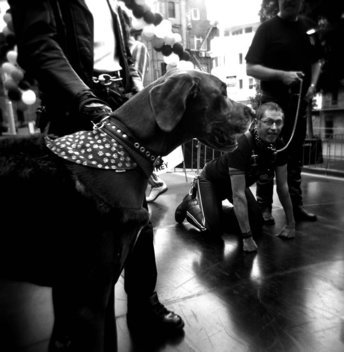 ©Tamara Voninski. Metropolis- Dog and owner competition in Sdney.