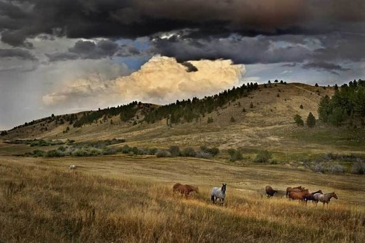 Horses quietly graze in the gathering twilght as a thunderhead moves east. Switchback Ranch, Stillwater County, MT