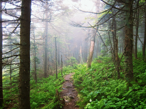 Appalachian Trail / Long Trail in the Killington, Vermont region.