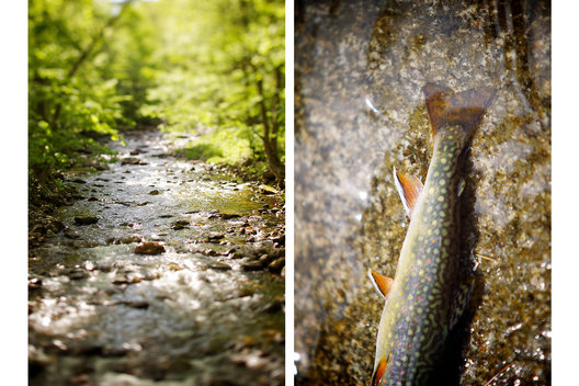 (L) Small Vermont creek.