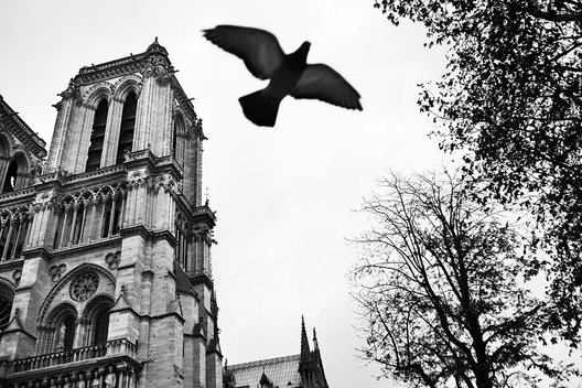Cathedral Notre Dame de Paris, Paris, France, Europe, french, black and white photography