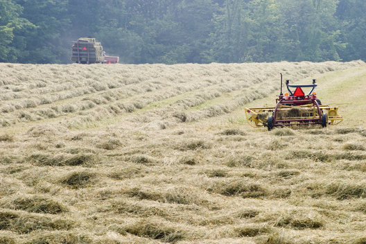 Bailing Organically grown Hay during Hot Summer, Huntsburg, Ohio, USA.
