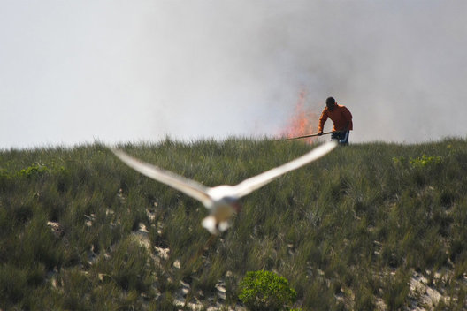 A Vezo fisherman struggles to extinguish a grass fire threatening a breeding ground for rare birdlife on the reserve island of Nosy Ve in Southern Madagascar.