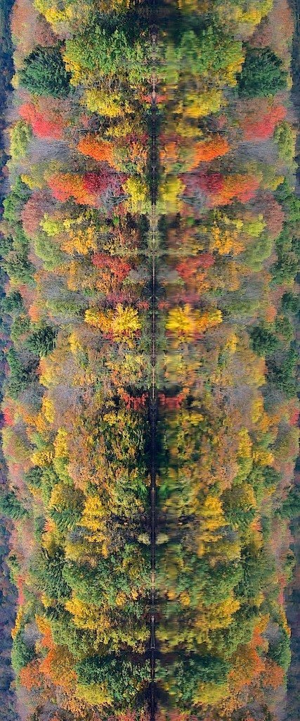 Note: This is a wide angle image of Autumn foilage and its lake reflection. However, turned on its side, observe the middle column of the photo from the top down and you'll see a number of animal images. Quirky!