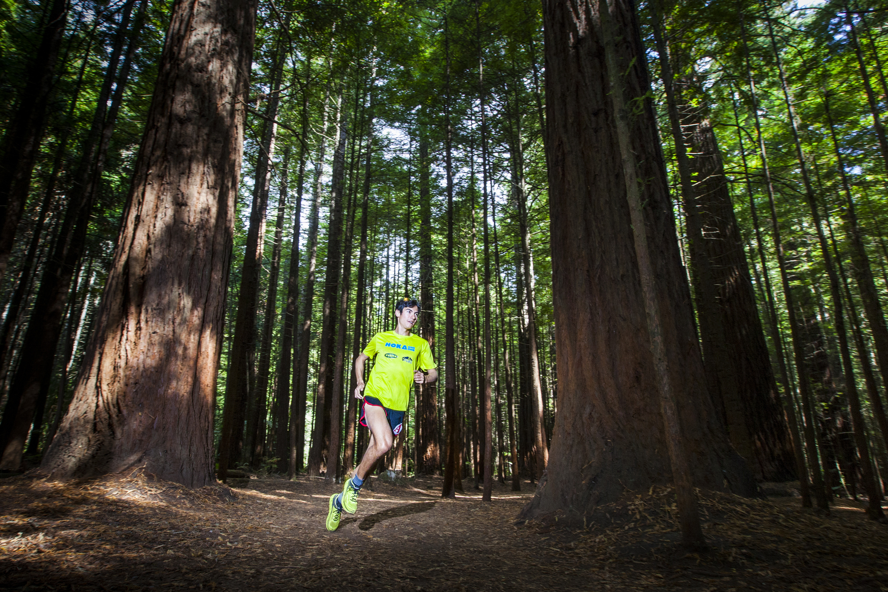 Sage Canaday enjoying the Rotorua redwood forest before taking on the 2014 Tarawera Ultra.