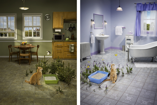 Fresh Step Cat Litter / Hugh Kretschmer