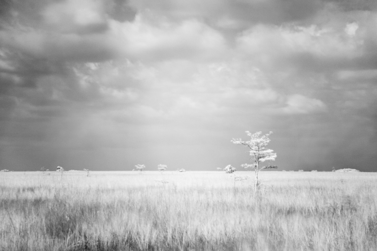 "In this infrared photograph, at Pa-hay-okee Overlook, visitors see a never-ending stretch of flat land with an occasional tree.  Pa-hay okee Overlook lies nearly halfway between the Everglades National Park's Ernest F. Coe and Flamingo Visitor Centers.  This image is part of my ""Alternative Reality"" series.  All cameras have an internal filter that blocks most, if not all, infrared light from passing through it.  Because the infrared blocking filter in my camera still allows a very small amount of infrared light to trickle through, I am able to do infrared  photography by placing a filter on my camera lens that blocks all visible light.  Thus, the camera can still make use of the trickle of infrared allowed through.  Because so little light enters the camera, I use a tripod and set very long exposures, up to 10 minutes in length.  The advantage of working this way is that the long exposures allow me to creatively capture the movement of my subjects  such as trees and grass blowing in the wind.  I love the resulting effect, as well as the alternative reality of infrared."