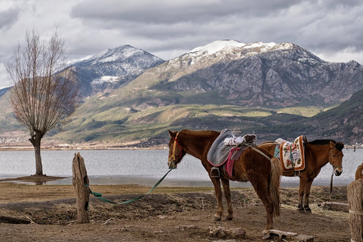 China, Two horses at Lashi Lake, near Lijiang, Yunnan Province