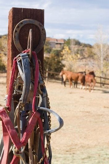 The harnesses hang on a horseshoe hook on the pen. Many of the horses can't be ridden anymore because of the poor treatment they received before being rescued by the GC.