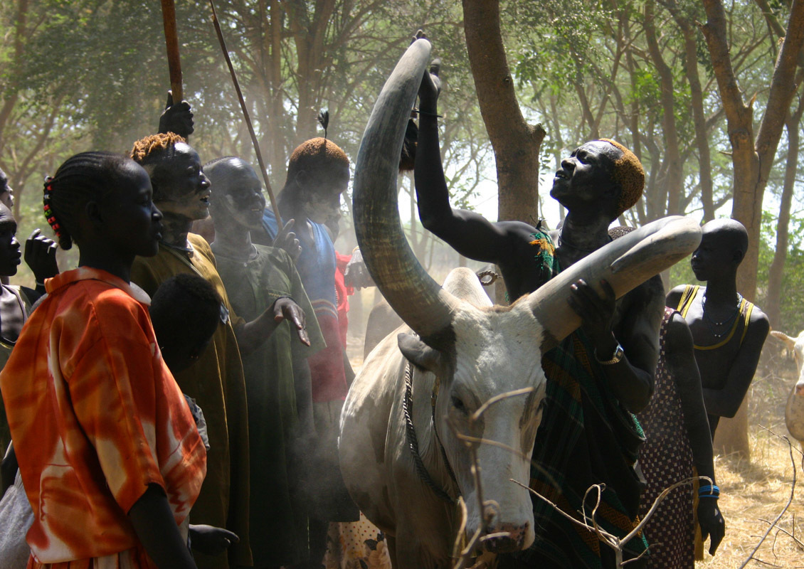 A group of Dinka gather around a cow, proudly showing me its specially-shaped horns.  