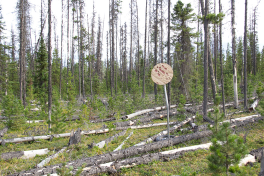 This series of photographs documents the placement of artifacts into remote locations in Northern British Columbia, which visualize spatial models depicting recorded Caribou habitat loss.