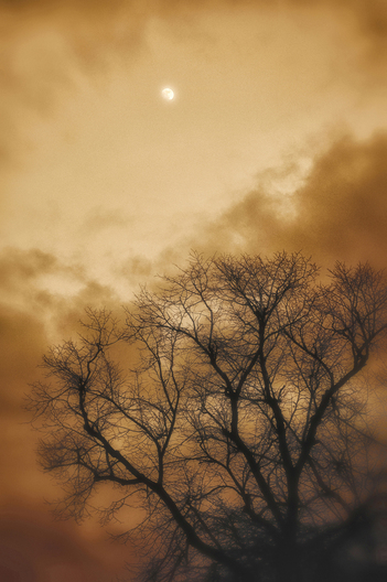 Eerie moonlight and tree