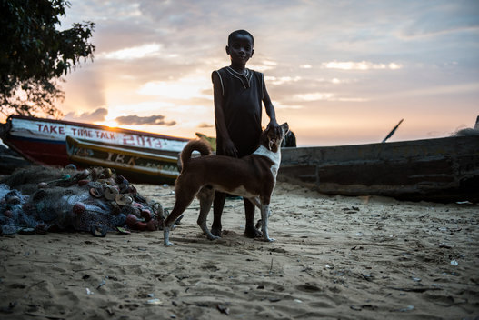 A young boy and his dog on the beach at sunset.
