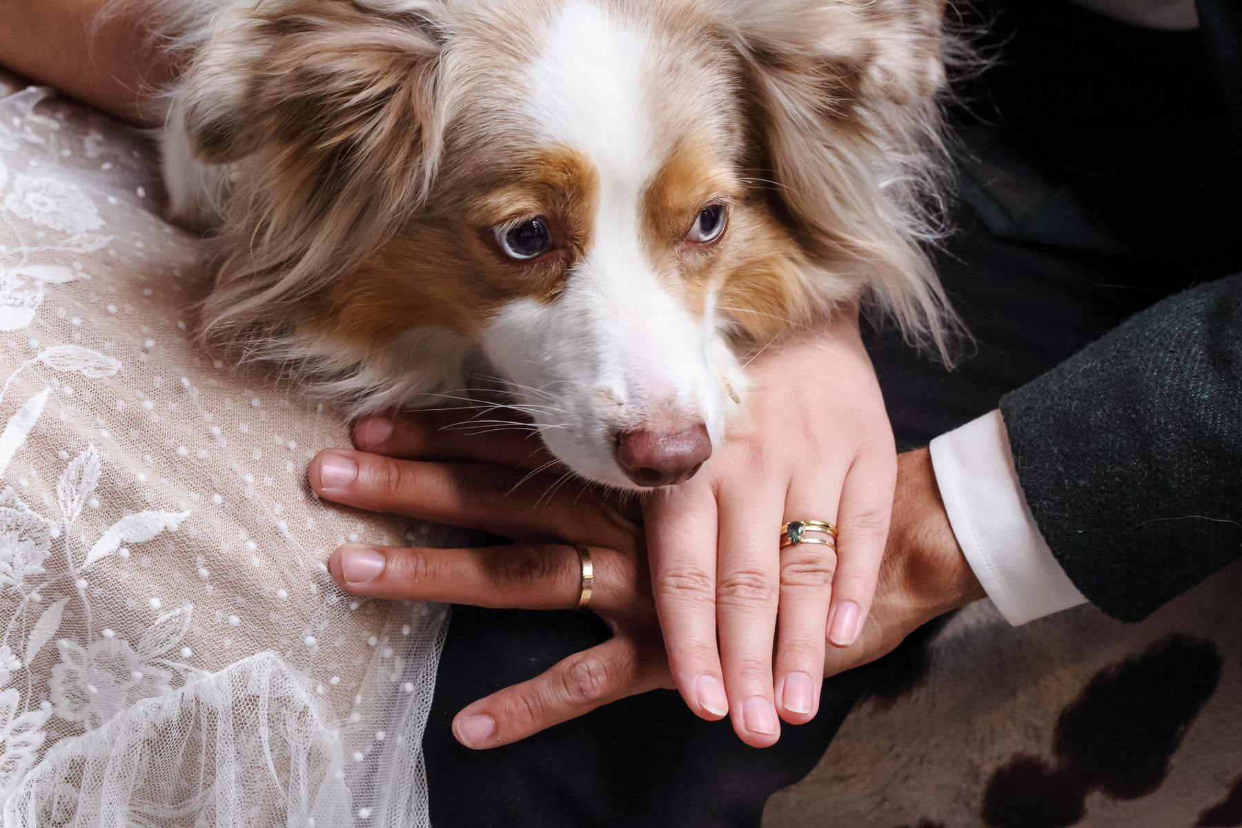matildas event barn troy in wedding dog with rings