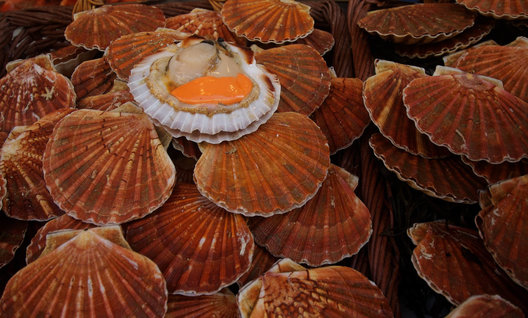 Scallops,Paris, France