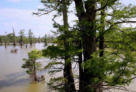 Broad Lake - Yazoo City, Mississippi