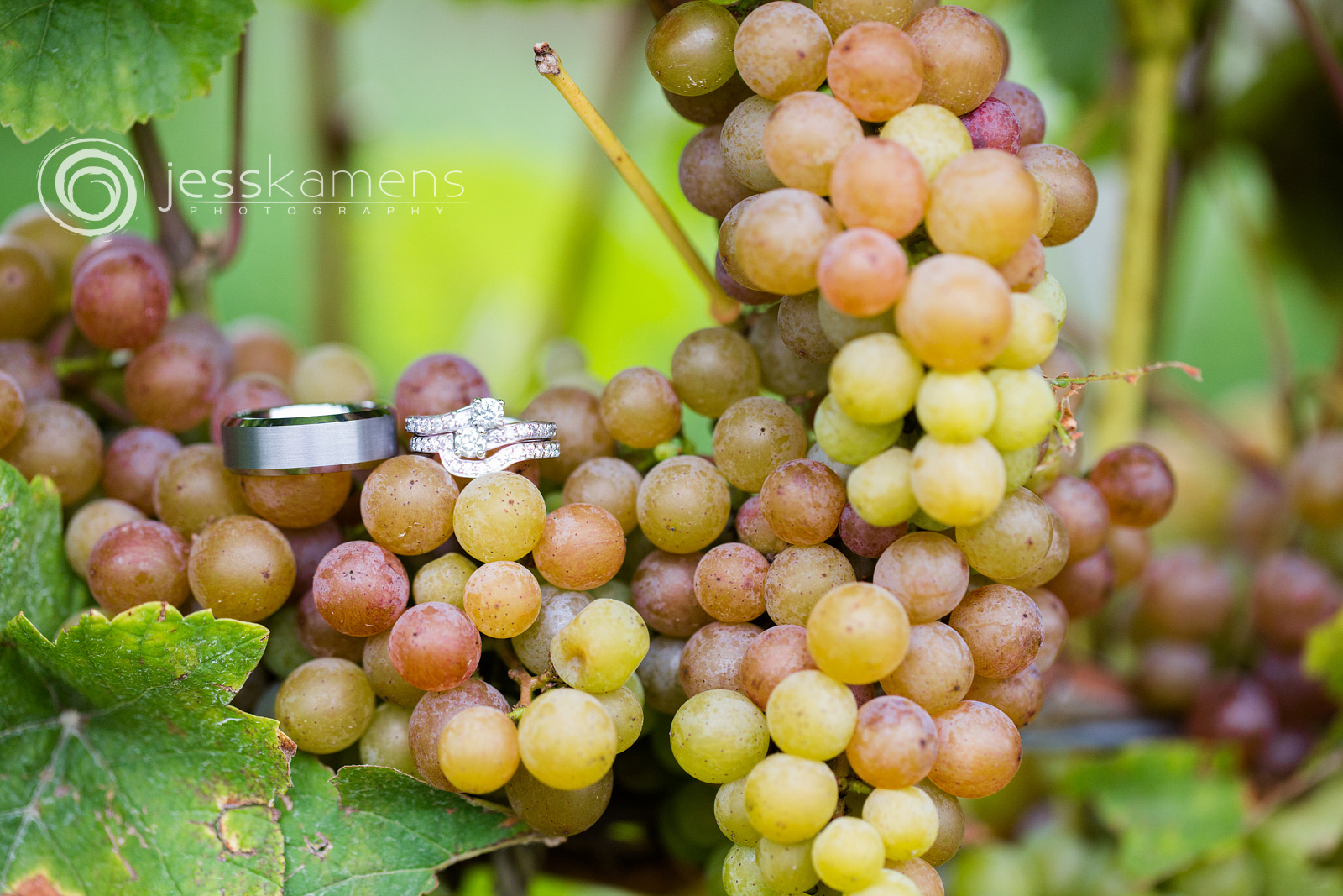 wedding rings on grapes in wine country in Geneva, NY
