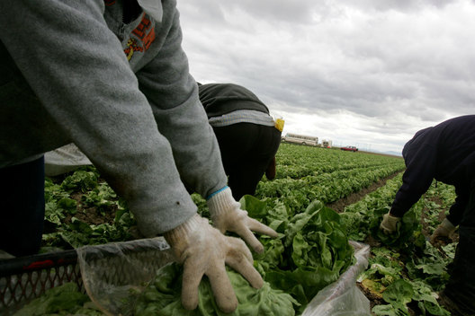 "Just outside of Huron, the mainly undocumented migrant workforce takes the back- breaking work of lettuce picking, which earns on average six to eight dollars an hour. California's Central Valley offers at least seasonal agriculture jobs to 600,000 to 700,000 workers each year. Huron, the ""Heart of the Valley,""is a city of 5,900 in western Fresno county with six bars, five gangs and a famous drug alley. Twice a year, when the lettuce is harvested, the population doubles. Gang members know that workers without bank accounts carry large amounts of cash, and robberies are common. It was once described as ""knife-fight city,"" due the evening activities of some migrants who descend on the city."