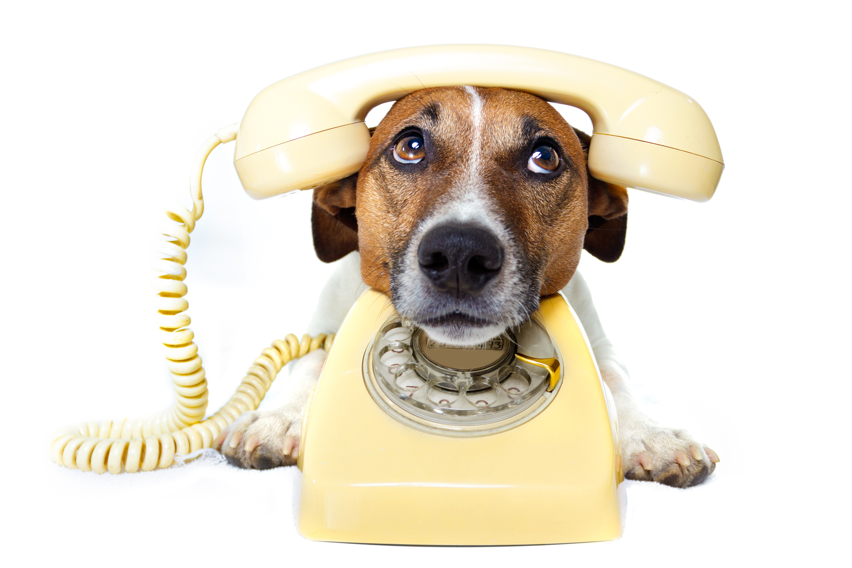 Dog using a yellow phone