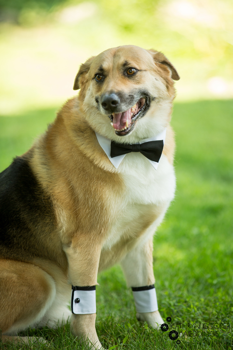Wedding dog in cufflinks and bowtie