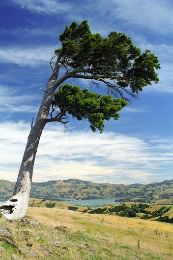 Banks Peninsula Track, New Zealand