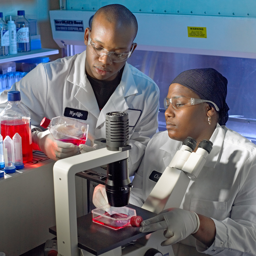 Wycliffe Daniels (standing) and Halimatu Mohammed (seated) Studying cell cultures with a microscope. Biology. Rahway.