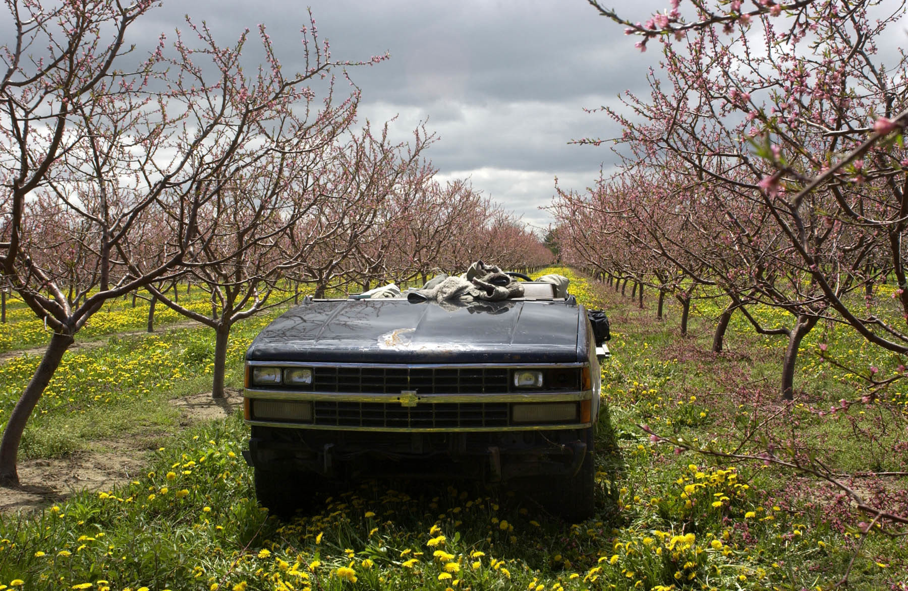 A roofless truck sits as the migrant workers tend to the orchards.