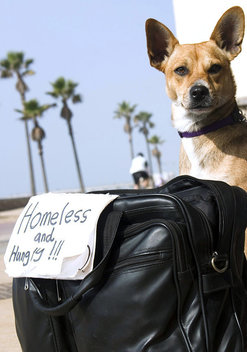 Sparky, a stray dog owned by homeless man Joshua of Los Angeles, sits next to a sign asking for food on the sidewalk at the Huntington Beach Pier. Joshua rescued the dog when he found her tied to a shopping cart on the streets of L.A. It took him three days to get close enough to her to untie the rope and even longer for Sparky to allow him to pet or hold her. She has been with him for several months now and is very affectionate.