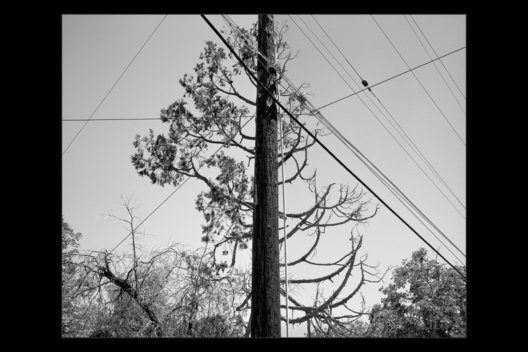 tree behind telephone pole near Adelanto