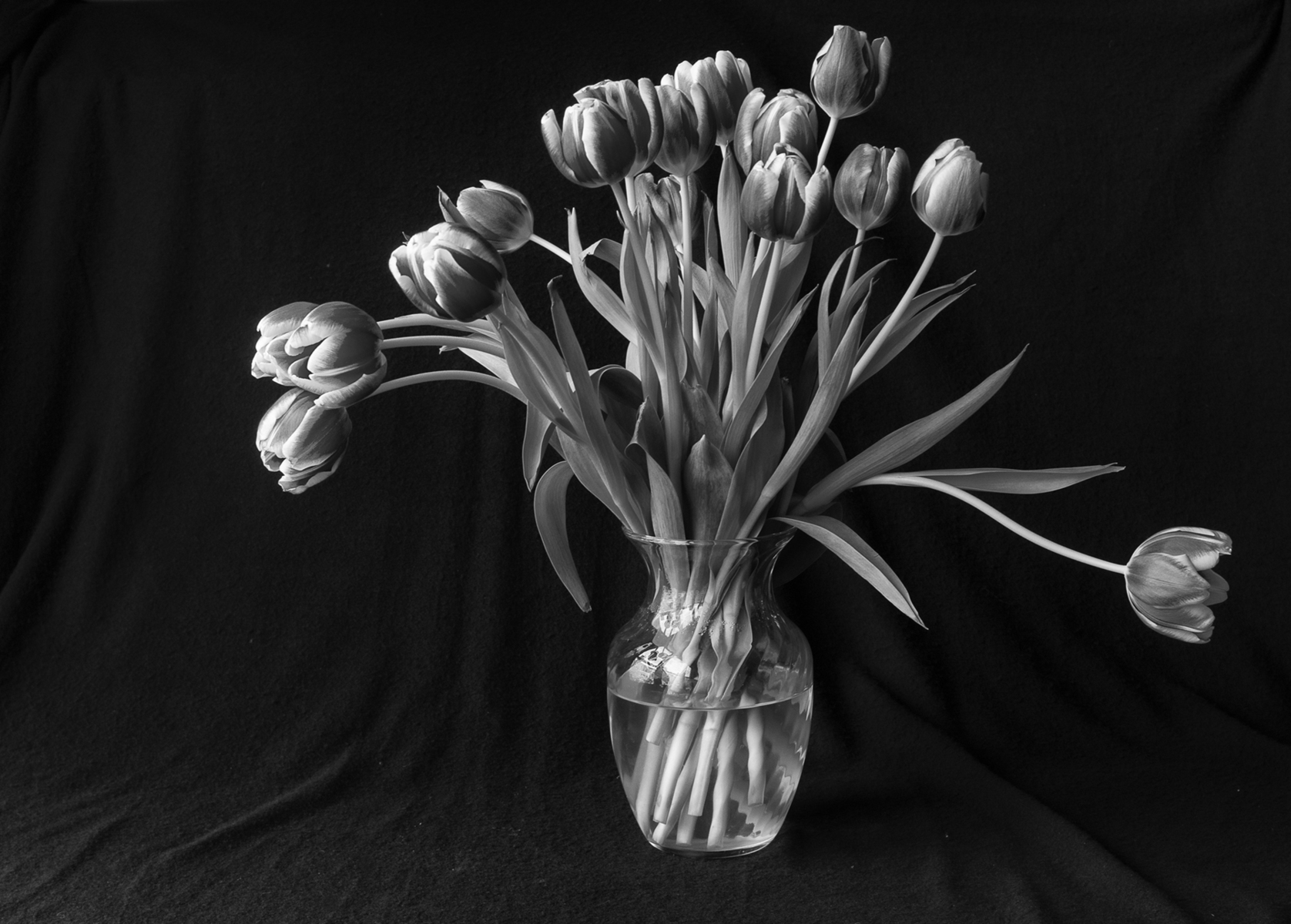 Still Life of tulips iin Black & White