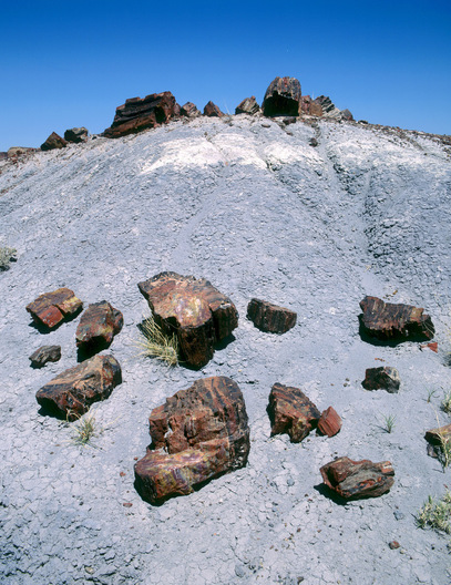 Petrified Forrest, Arizona