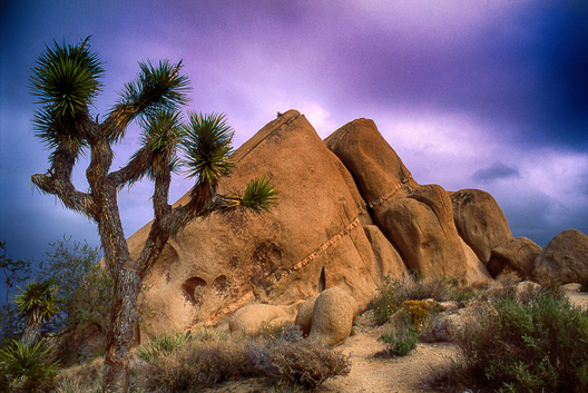 Joshua Tree National Park in great light.