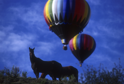 Horses and hot air balloons near Snowmass Village, Colorado.  Michael Brands. 970-379-1885.