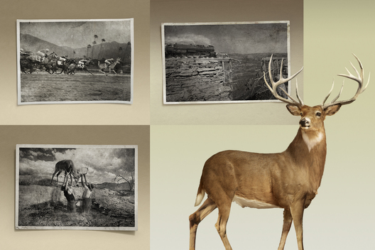 Cazadores Tequila / Deer Fables / Stuart Hall Photography