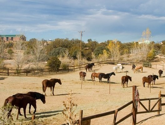 The horses at the Golden Carrot graze in their pen on a recent winter afternoon. There are 29 horses in all at the GC, many of which require special care.