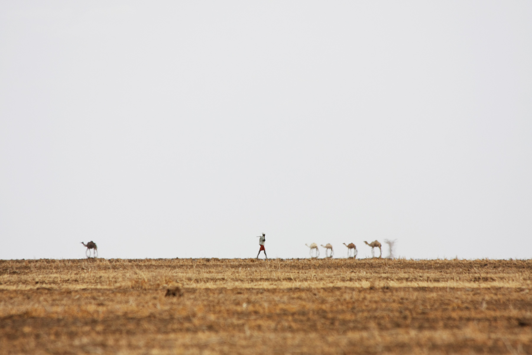 Man and camels on the horizon behind a mirage in the Chalbi desert.