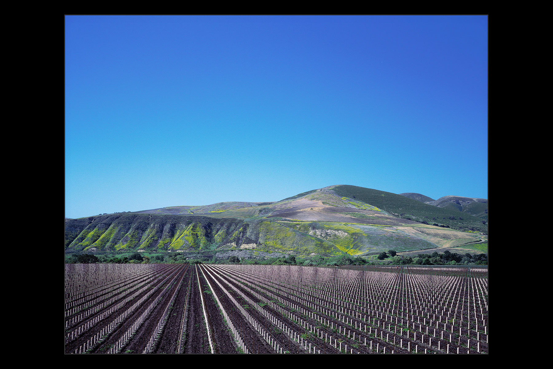 vineyard stakes, central California