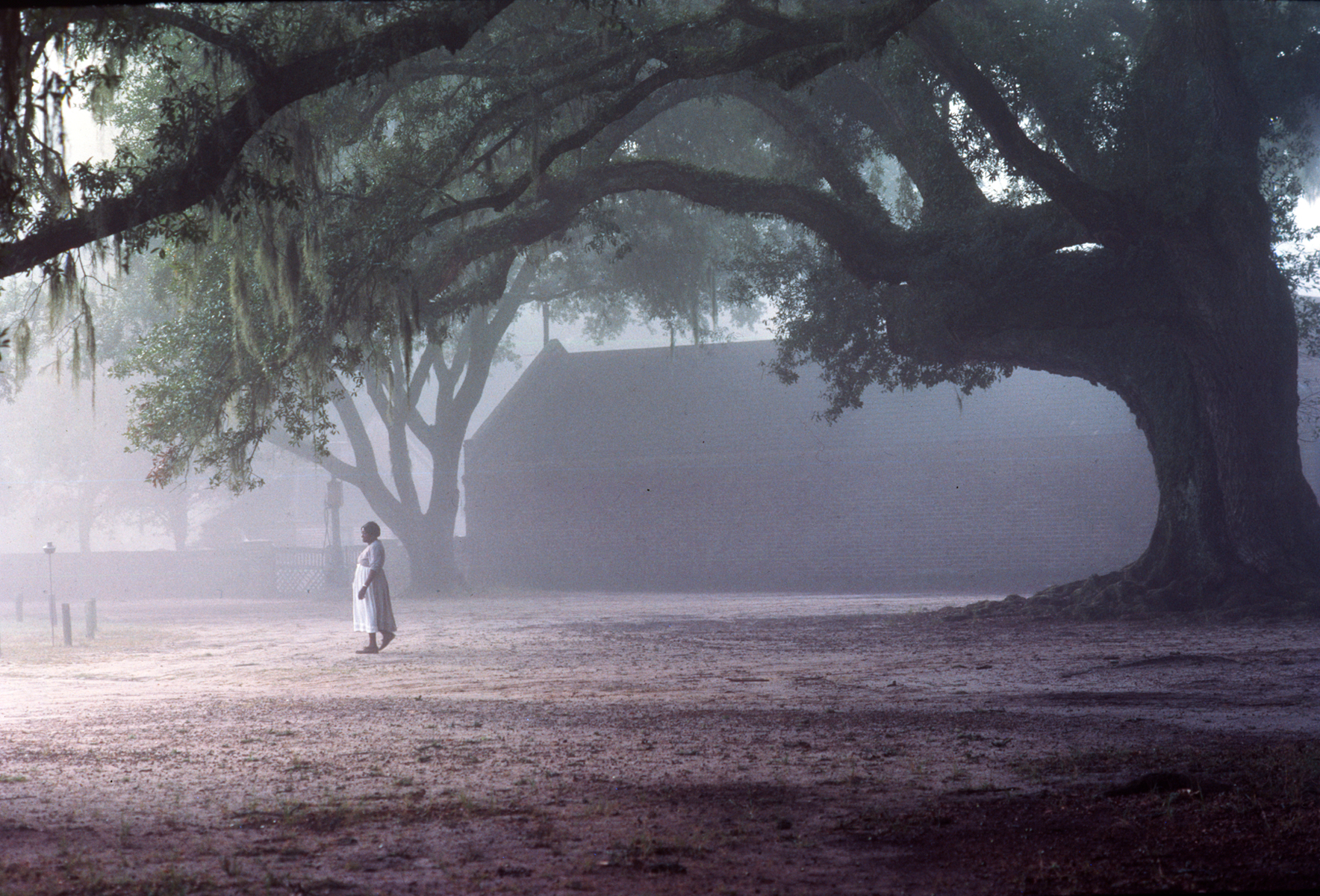 Martha under live oak, Middleton Place, South Caroloina
